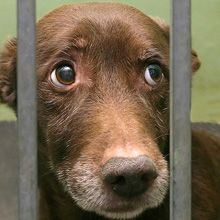 Don't Buy Pet Store Puppies, People: Study Finds High Rates of Behavior Problems