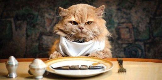 ¿Por qué los gatos son quisquillosos con la comida y los perros consumen casi cualquier cosa?