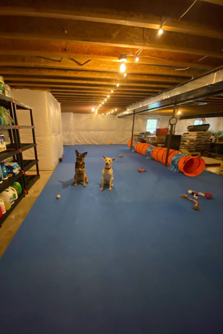 Dog agility mats and flooring flyball mats dog agility