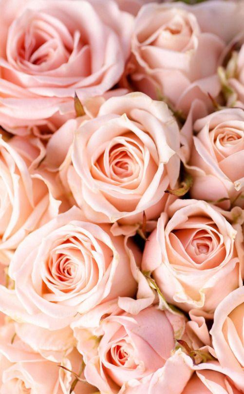 ℓυηα мι αηgєℓ ♡   Papel pintado flores, Fondos de flores y ...