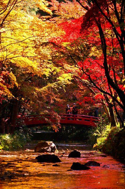 Shizuoka, Japan via GANREF | 川面を染めて