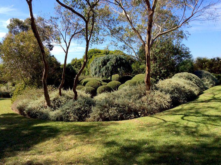 The Garden Vineyard 2015