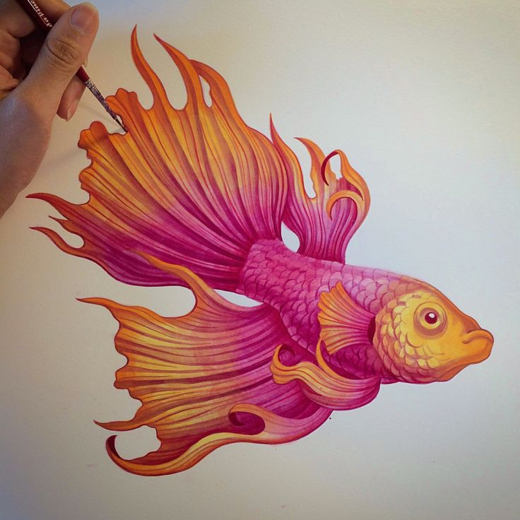 Sanjana Makes Art — Betta Splendens fish painted in my watercolour...