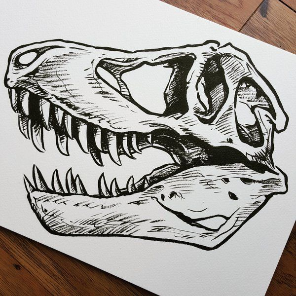 "Art by Kate Kennedy on Twitter: ""T-rex skull with pentel brush pen ..."