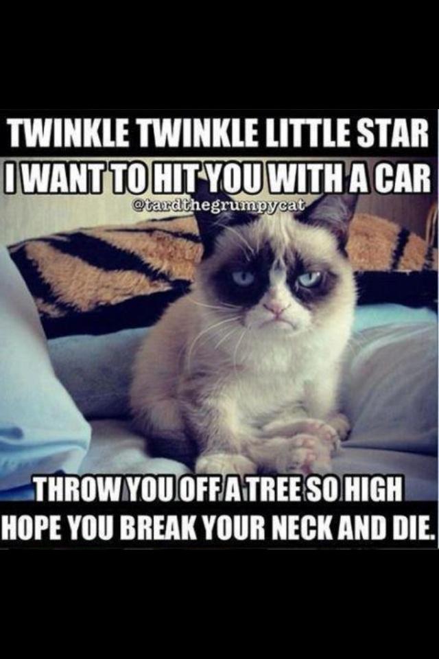 17 Best images about Grumpy Cat on Pinterest   Grumpy cat ...