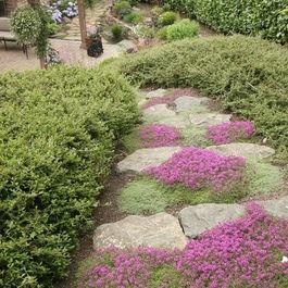 19 best perennials for zone 7a edison nj images on pinterest for Perennial garden design zone 7