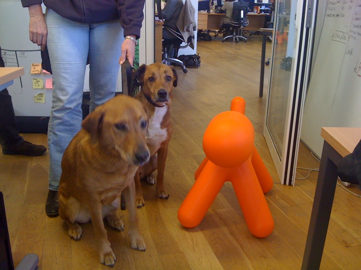 A plastic dog making friends with two real dogs that belong to Vanessa Shenton of The Compliance Partner.