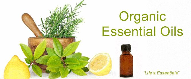 Organic Essential Oils – Its uses and types  Organic Essential Oils are natural ways to treat various types of ailments and infections. These should be one of the essential items in your home. Organic Essential Oils in USA benefit both emotionally and medically. See more at: https://aromatherapyessentialoilscanada.wordpress.com/2015/03/04/organic-essential-oils-its-uses-and-types/