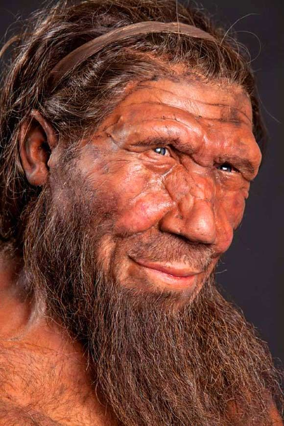 neanderthals and human evolution Studies show the girl was closely related to neanderthals, yet distinct enough to merit classification as a new species of archaic humans, which scientists named denisovan after the cave where the pinkie bone was found.