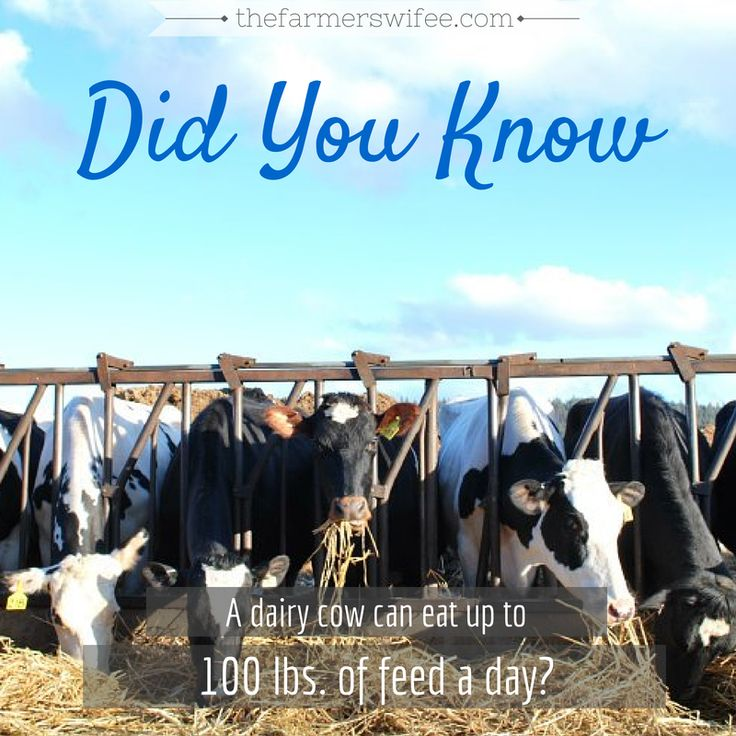 #DidYouKnow facts about #cows #agriculture