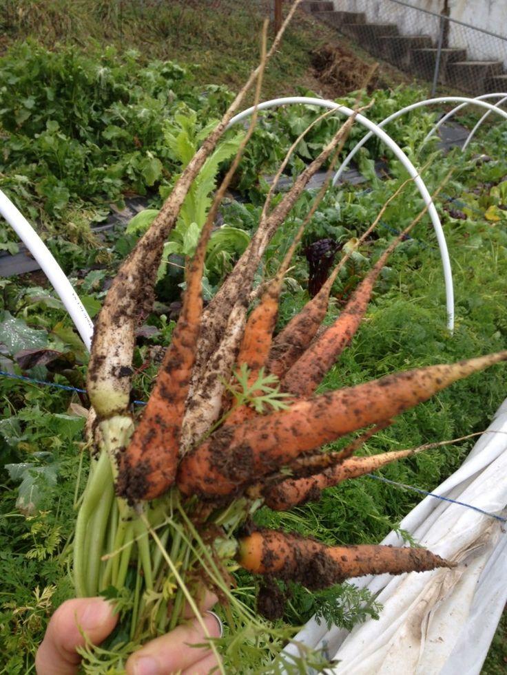 Winter Plants, Winter Garden, Winter Vegetables, Gardening Vegetables, Winter  Vegetable Gardening, Root Vegetables, Organic Gardening, Garden Tips, Garden  ...