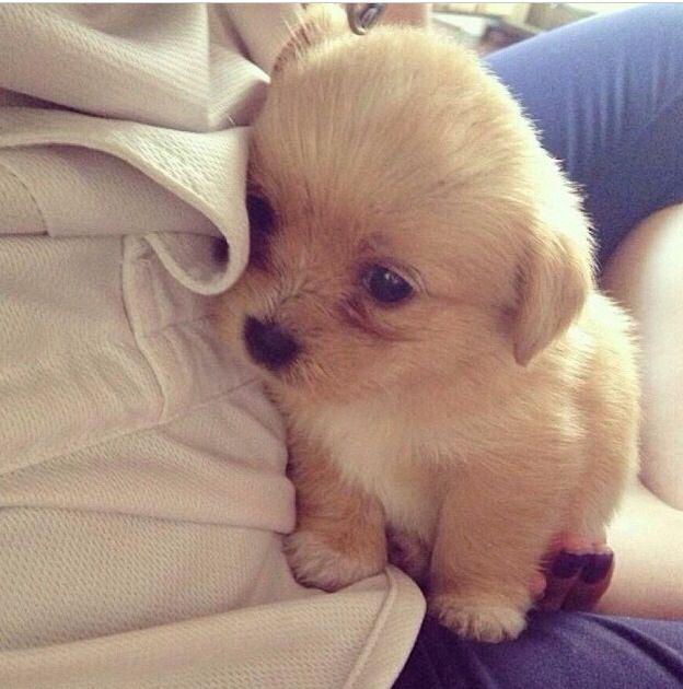 Baby pupp