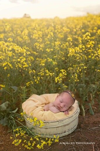 Aurora Joy Photography  Outdoor Newborn photography  Www.aurorajoyphotography.com.au