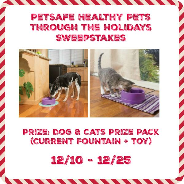Want to make the holiday season as healthy as possible for your dog or cat? Enter to win a PetSafe healthy pet prize pack for dogs or cats (including a Current Founts and dog or cat toy here! 2 winners - one dog prize pack & 1 cat prize pack).