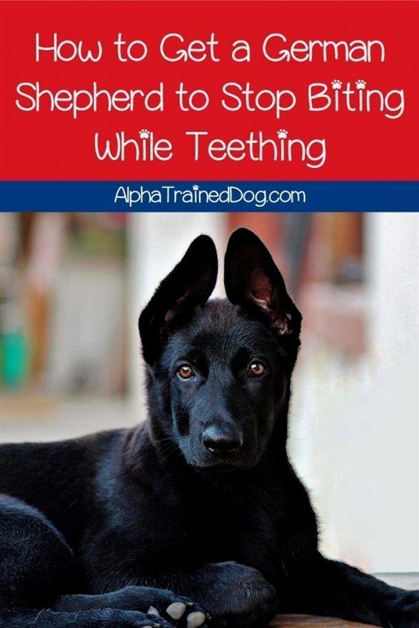Police Dog Training Equipment Dog Training Spokane Dog