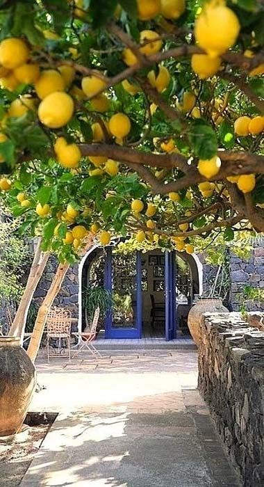 These lemon trees are in Amalfi, Italy. The home we are moving to very soon already has a lemon tree in the back yard... and, a palm tree and there are crepe myrtle trees everywhere.