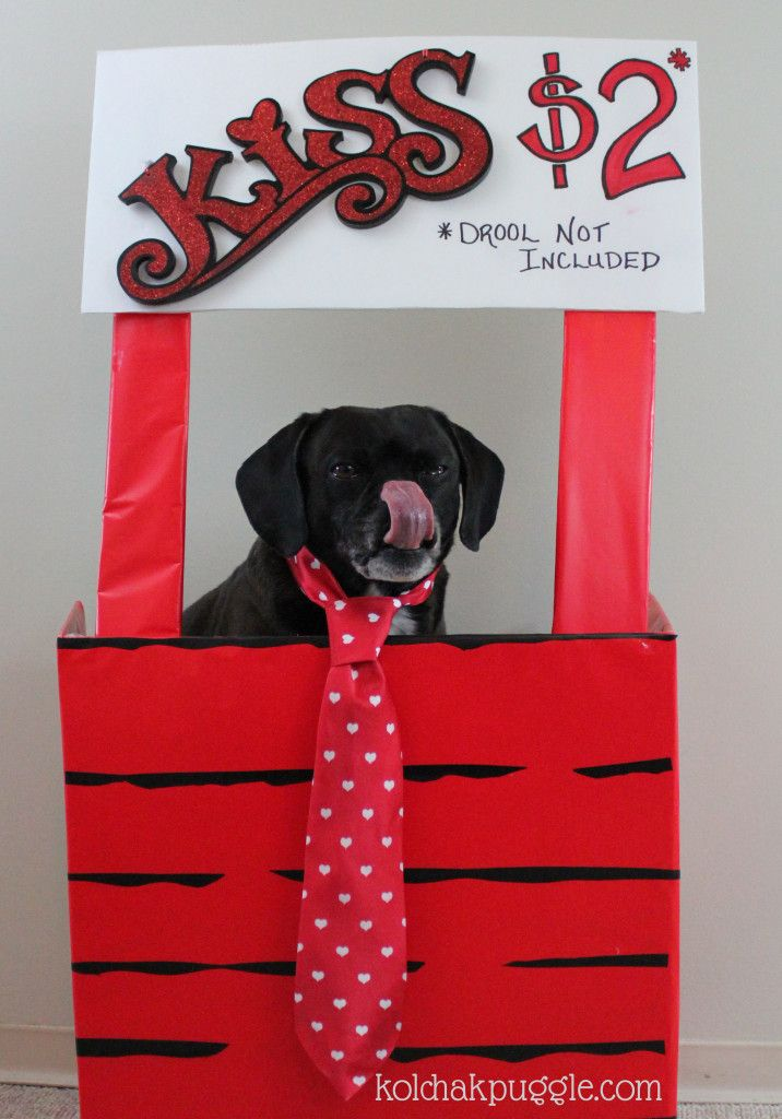 Cheap and easy Valentine's Day Dog Photos Kissing Booth