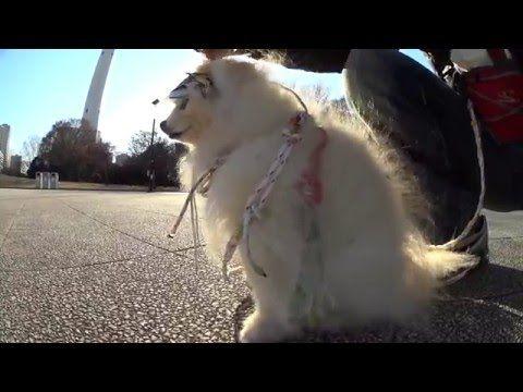愛犬とお散歩 音に敏感な子の行動パターン 理解してあげて^  ネッ 【撮影テクニック】