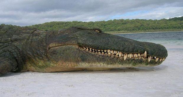 Dinossauros são considerados os maiores e mais temidos animais da pré-história, mas o planeta Terra foi lar de muitas outras criaturas gigantes.