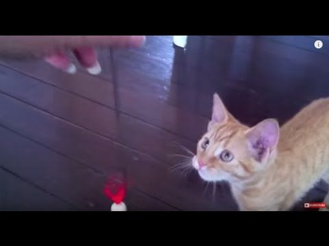 Adorable Kitten Plays with Crazy Wooden Toy - Autumn the Ginger Ninja Ep...