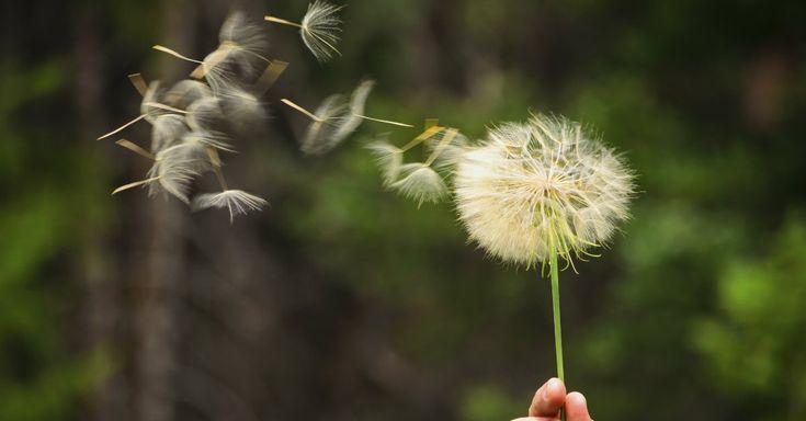"""""""A arte do desapego é simplesmente sobre a capacitação pessoal. Aprendendo a perceber o que você está no comando, perceber o que você controla, e mais importante, o que você não controla. """"  - Steve Maraboli, Assumidamente Você: Reflexões sobre a Vida e a Experiência Humana"""