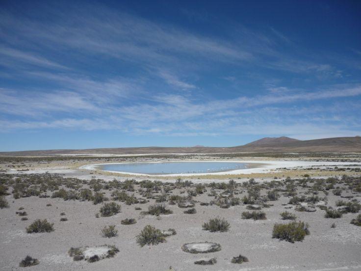 Parque Lauca, Arica Chile