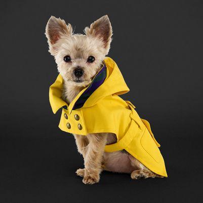 Ralph Lauren Dog Raincoat