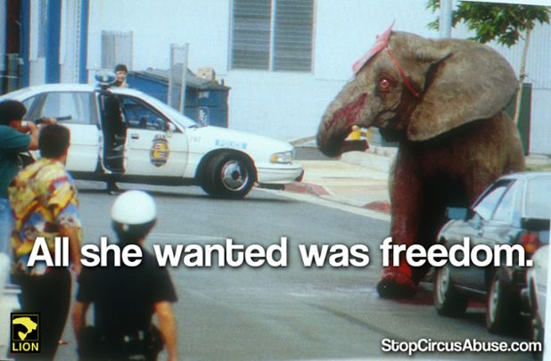 ALL she wanted was freedom.  RT if you #BoycottTheCircus!   SIGN: http://StopCircusAbuse.com