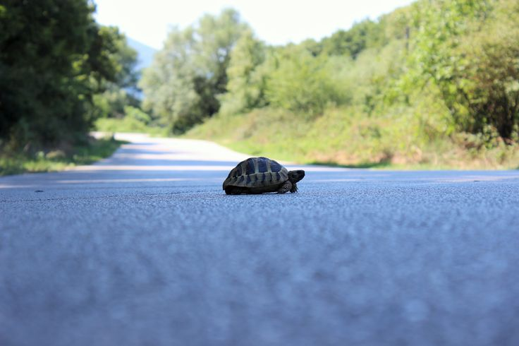 Little turtle close Ziros lake