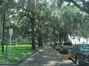 Spanish Moss in Savannah