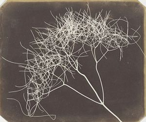 William Henry Fox Talbot (1800-1877)