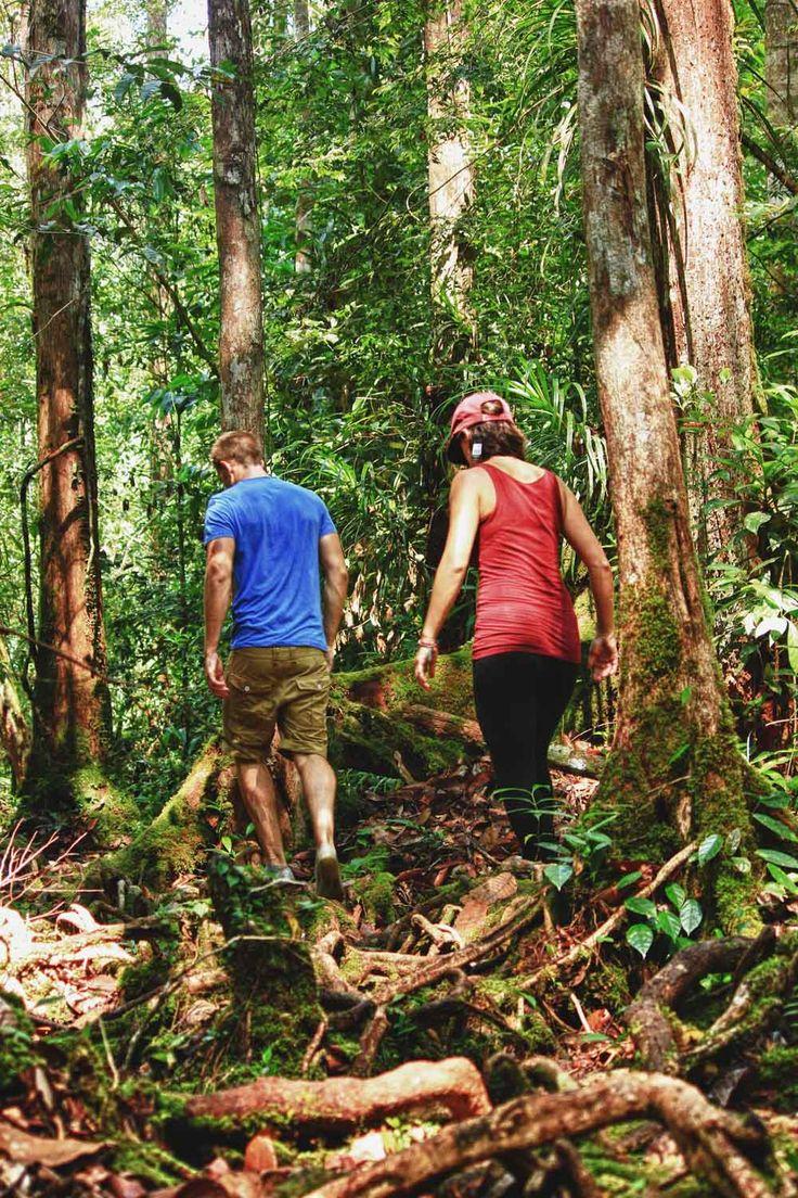GuideTrip: 5 Day Jungle Trek With Orangutan Guided Tour