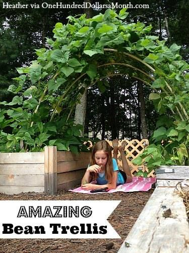 Ideas For Beans ~ This would make a great entry arch for our veggie-herb garden!