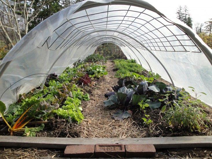 Winter Garden Tips from Stone Barns Center