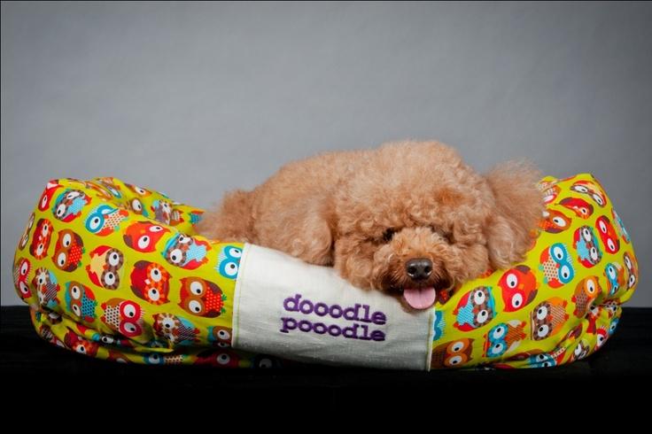 doodle says hi!  http://koon-beds.tumblr.com/