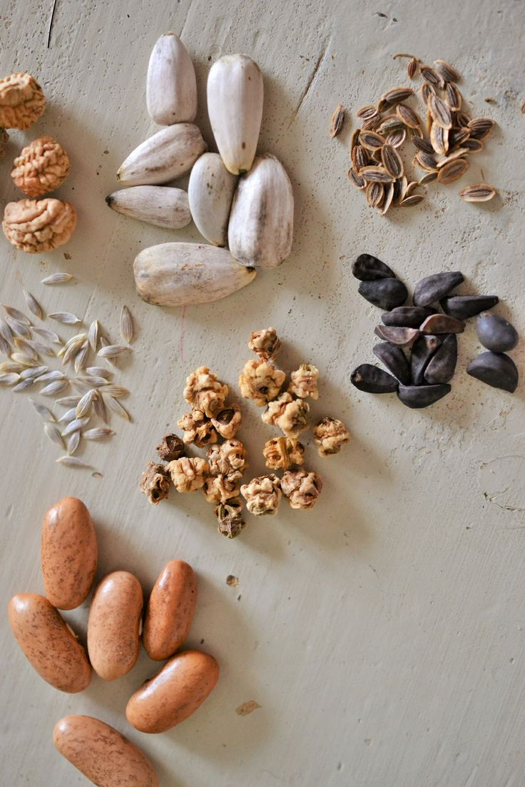 Different shapes of seeds