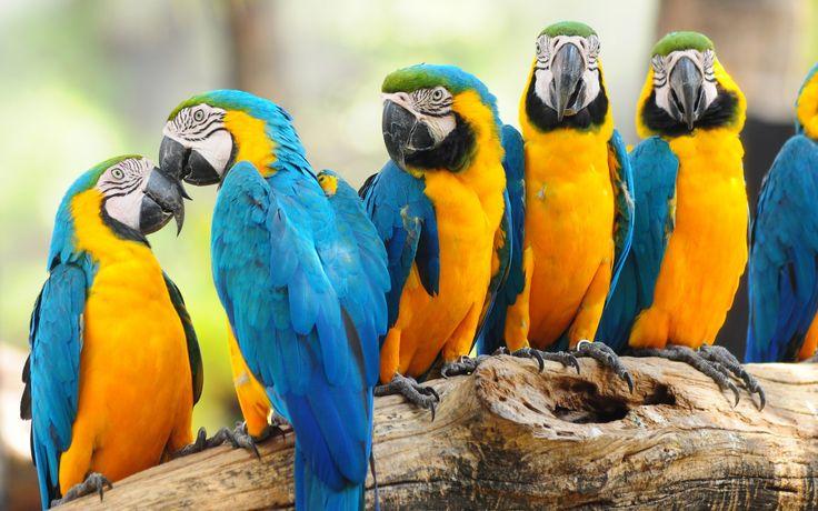 papağanlar - Google'da Ara