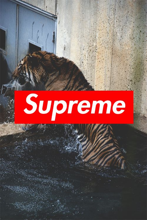kim kardashian iphone wallpaper supreme - Google Search