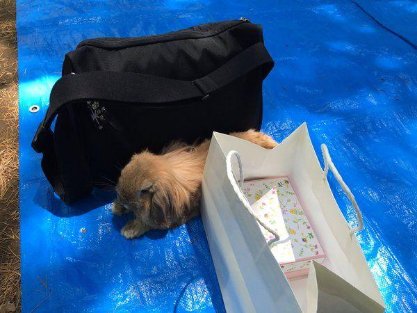 """suginorlさんのツイート: """"私のひらくPCバッグがお気に入りのようです。 https://t.co/H2aaUnDyHk"""""""