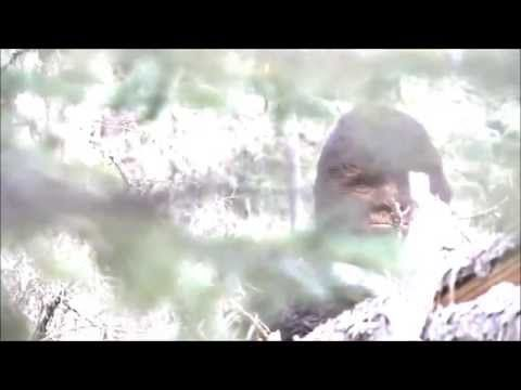 Clearest Video of Bigfoot Ever, Up Close! - YouTube