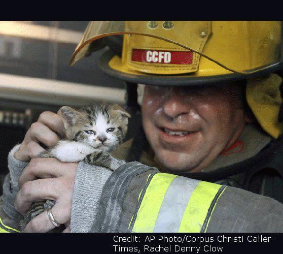 A tűzoltók megmentik házikedvenceinket is. Mi, gazdik hálásak vagyunk nekik.
