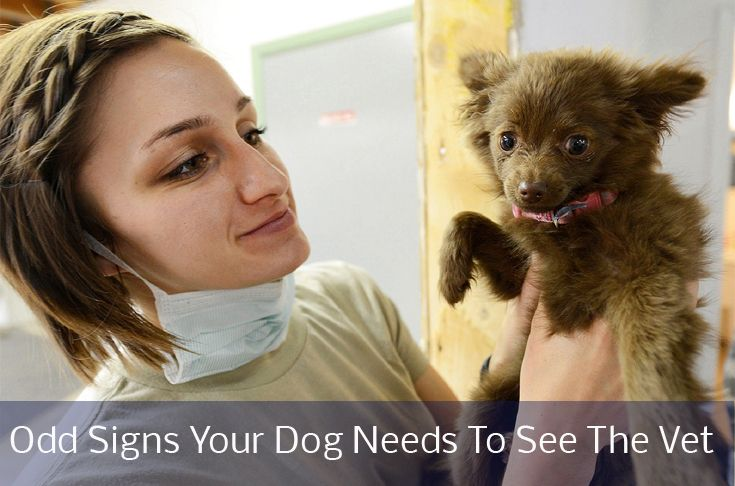 Odd signs Your Dog Needs To See the Vet ASAP