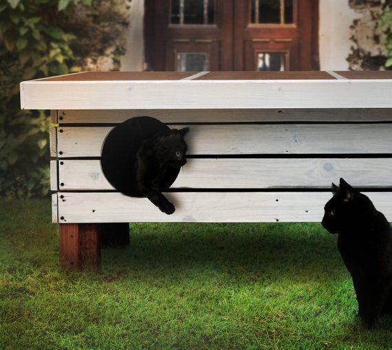 schuppen bei katzen