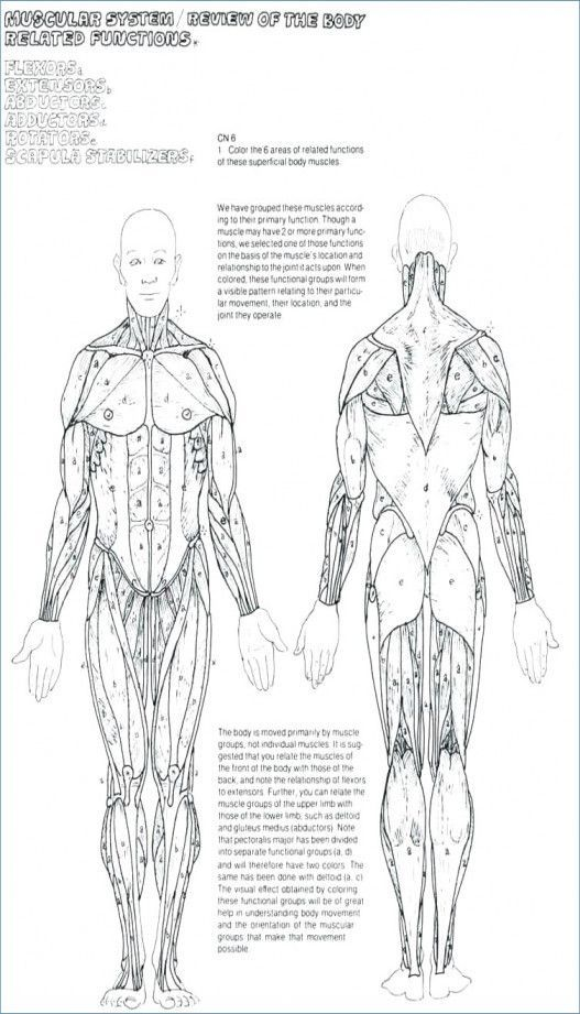 Image Result For Soft Tissue Anatomy Printable Anatomy Coloring Book, Coloring  Books, Coloring Pages To Print