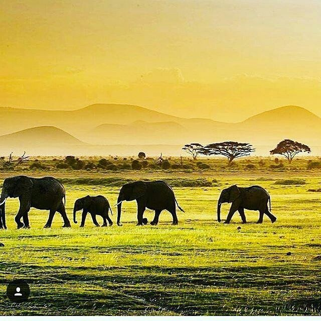 It is paradise. .Credit : @animalicos28 - . .  For amazing elephant photos and videos follow @elephant.gifts  #elephant #elephants #elephantlove