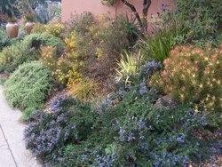 California natives planting