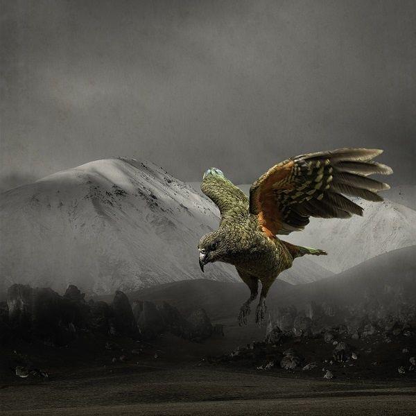 Flyin' Kea - Clive Collins - Industria