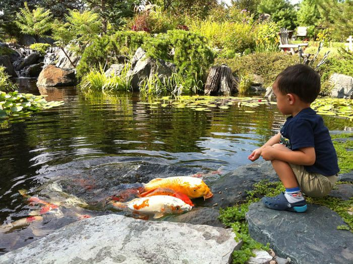 50 best fish pond images on pinterest gardening for Backyard pond animals