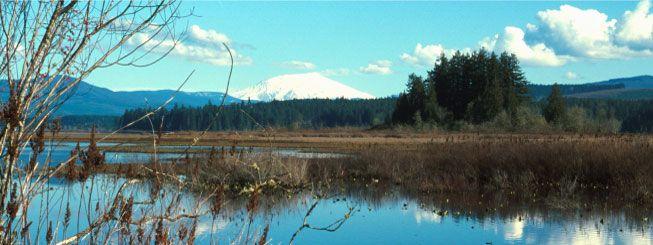 Toutle River RV Resort  Toutle River RV Resort, Castle Rock Washington Camping Overnight, Washington RV Resorts