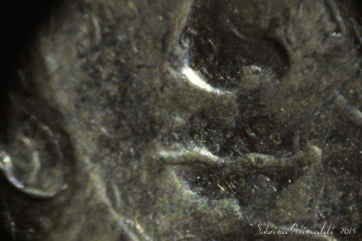 foto microscopio, 10 centesimi, microscope, italian euro 10 cent